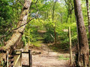 Adel Woods, Meanwood valley trail